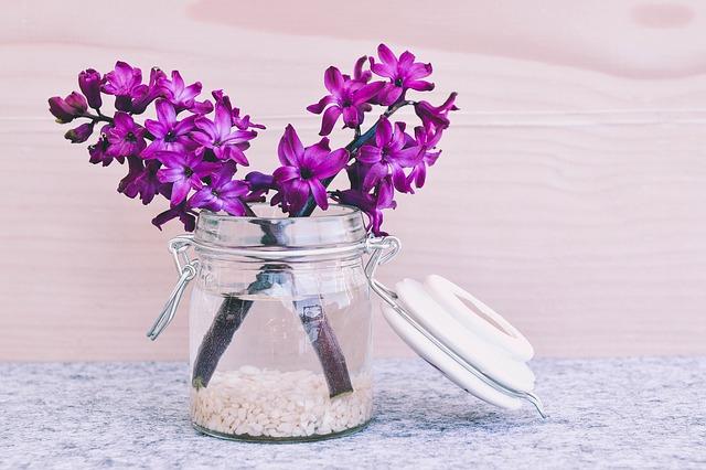 fialový hyacint